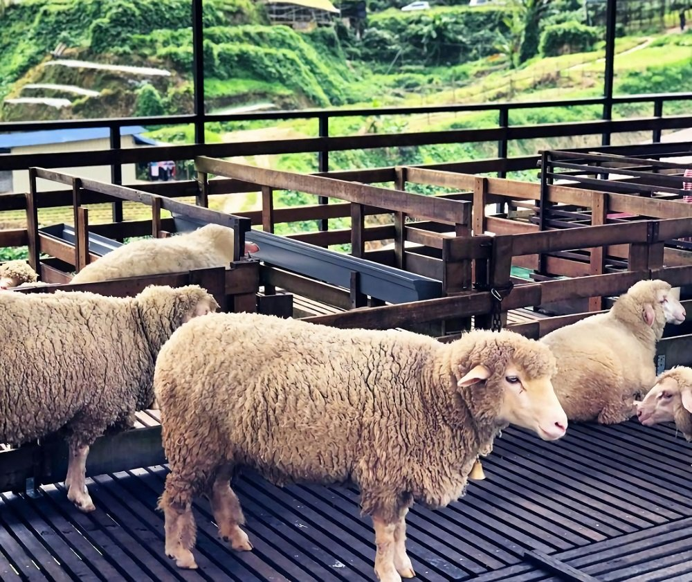 The sheep sanctuary